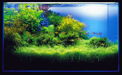 décoration d un aquarium